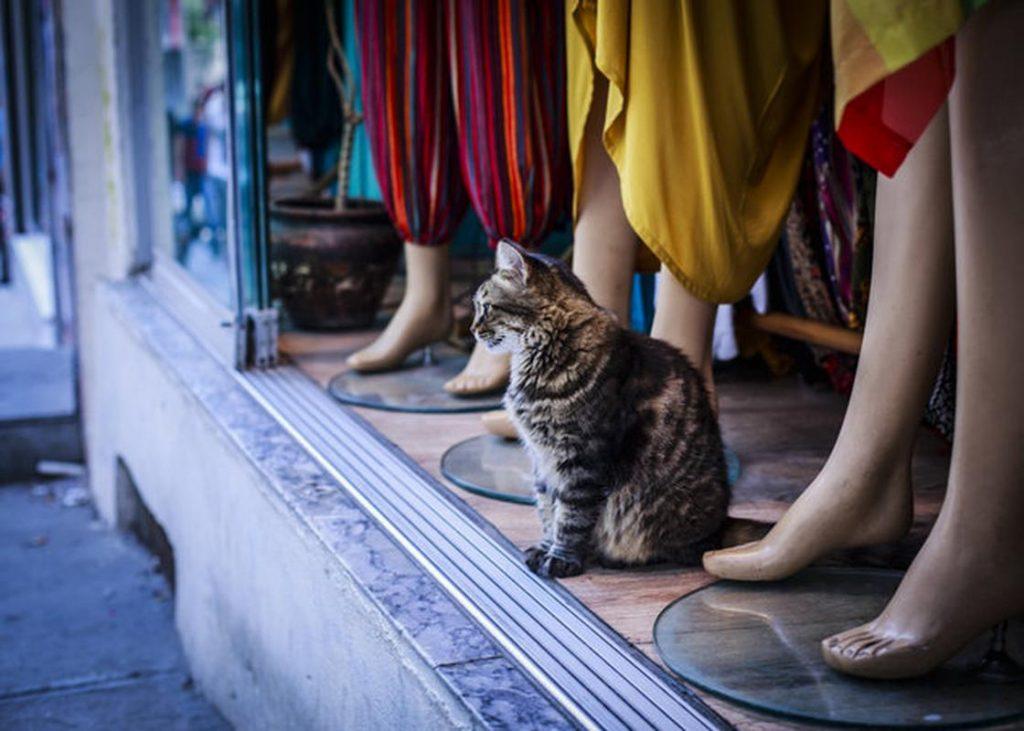 Кот стал звездой подиума, продефилировав во время показа мод в Турции
