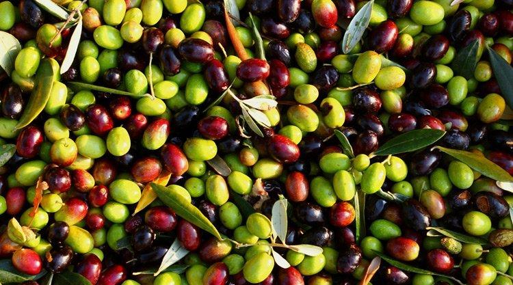 Почему нужно регулярно есть оливки?