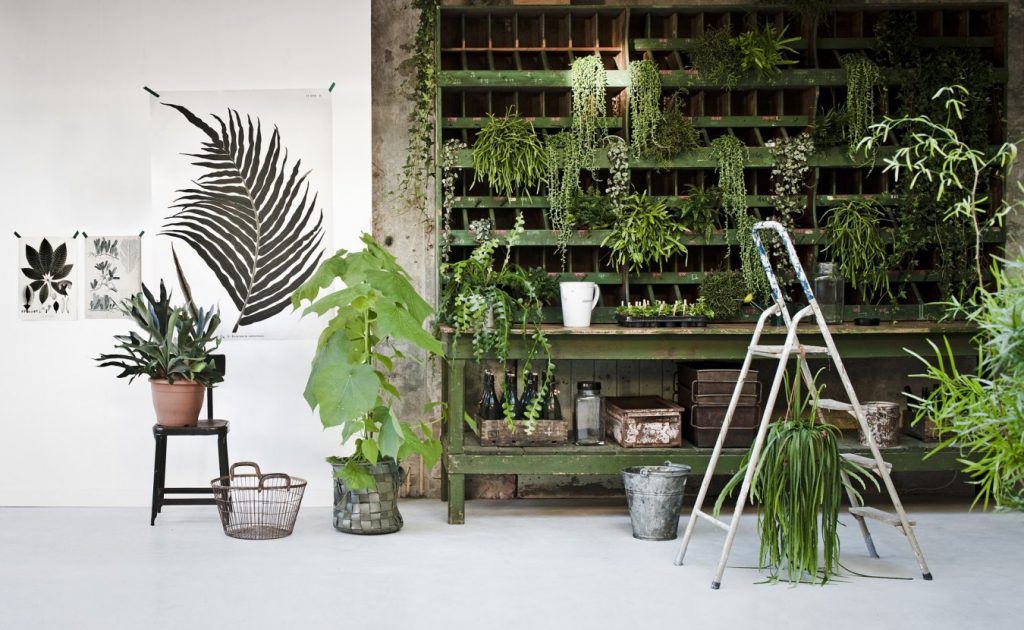 Как комнатные растения влияют на здоровье?