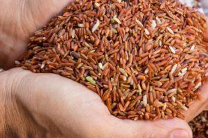 Коричневый рис и его неоценимая польза