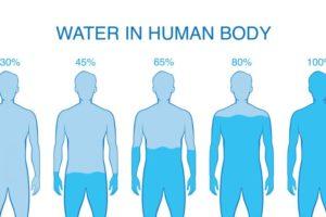 От чего зависит количество воды в организме?
