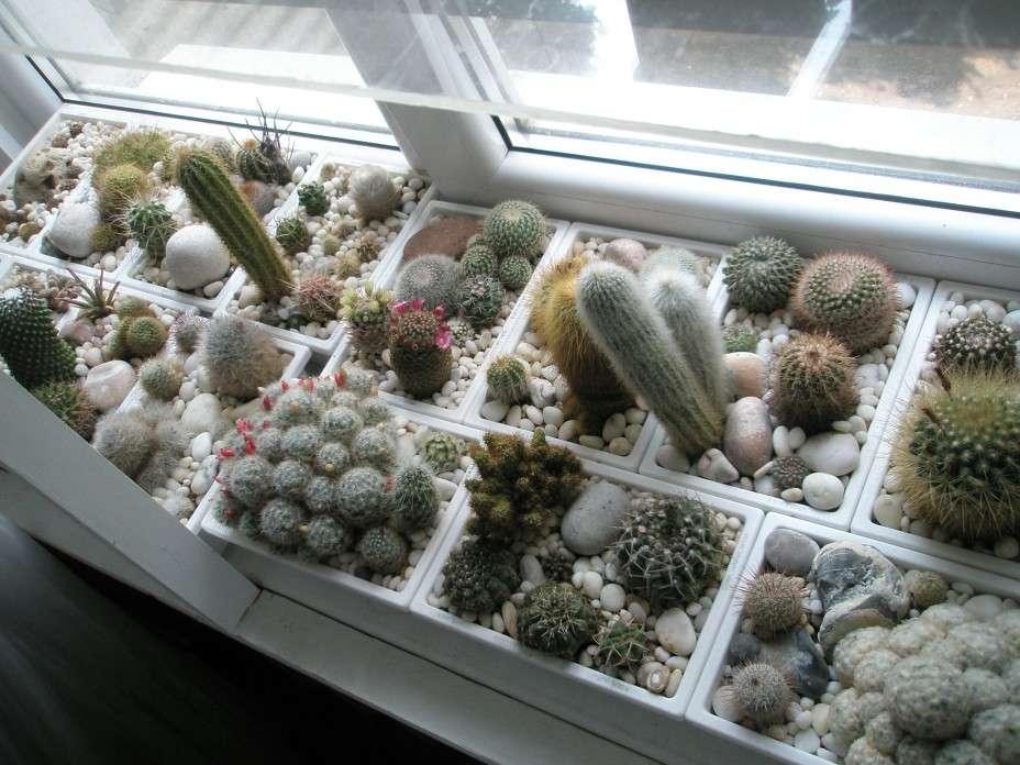 Пересадка кактусов: советы по выбору правильного контейнера