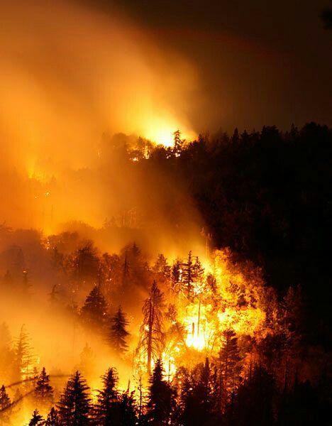 H&M отказались от закупки кожи в Бразилии из-за пожара в Амазонии