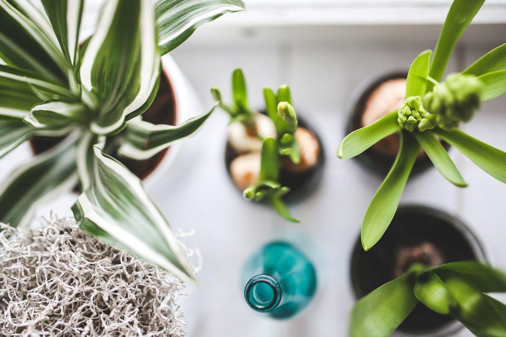 Секреты ухода за комнатными растениями зимой