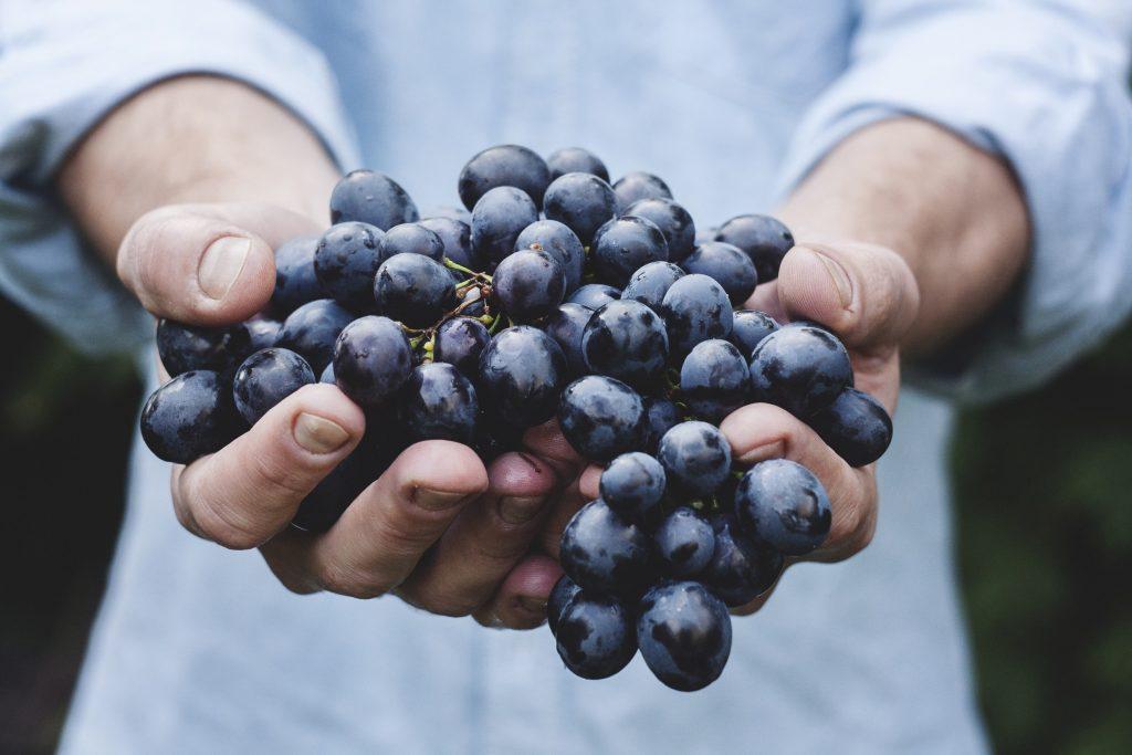 Зачем нужно есть чёрный виноград: 6 преимуществ для здоровья
