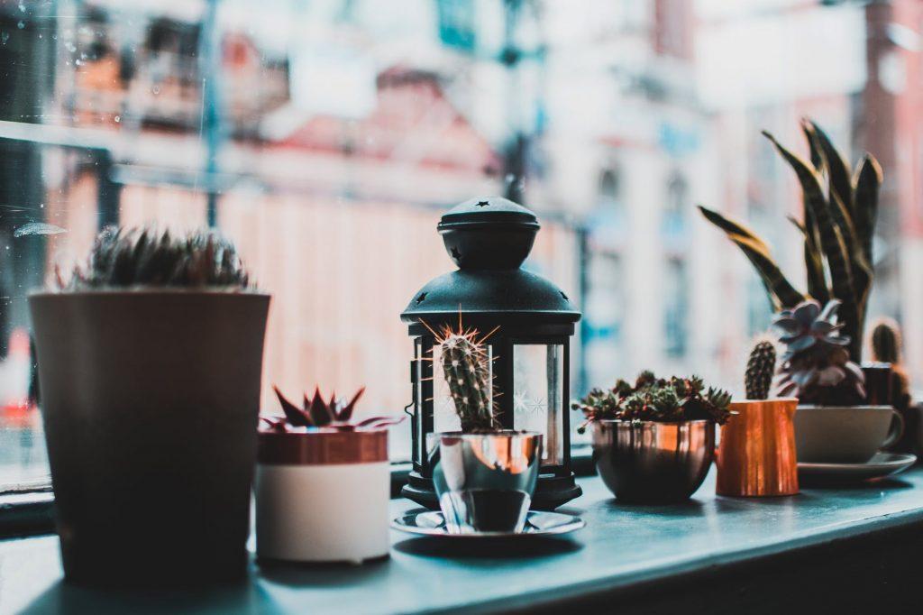 Какие растения нужно поставить у себя в спальне и почему?