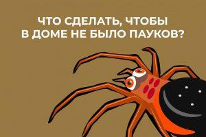 Лайфхак о том, как отпугнуть пауков от вашего дома