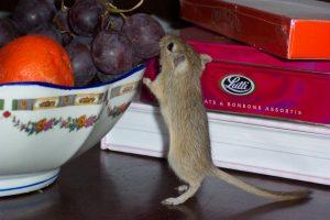 Что делать, чтобы на кухне не было мышей?