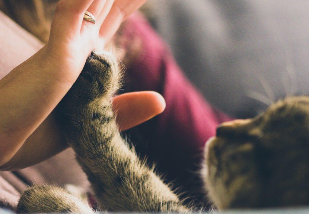 Почему коты любят спать на людях?