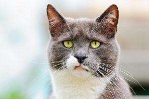 7 вещей, которые коты предпочли бы, чтобы люди не делали