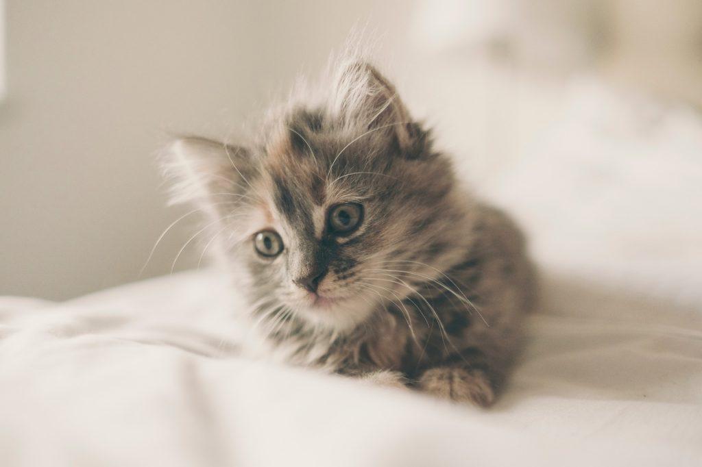 Не только счастье: почему мурлычут коты?