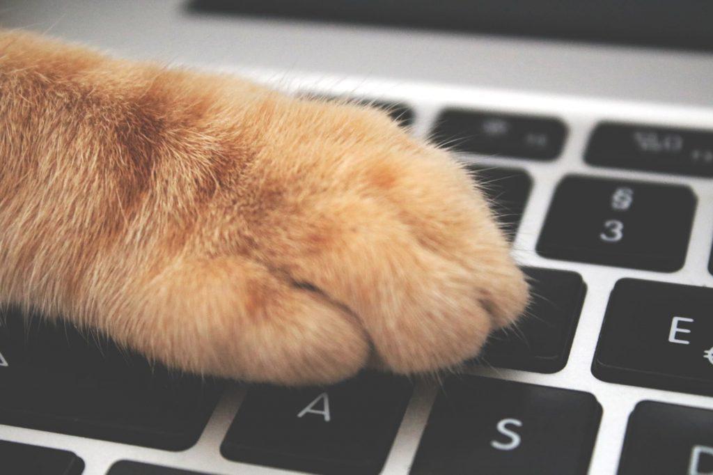 Почему коты обожают клавиатуру компьютера и ноутбука?