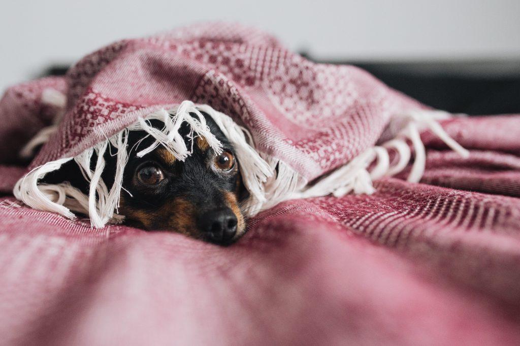 Болезнь или просто холод: из-за чего дрожат собаки?