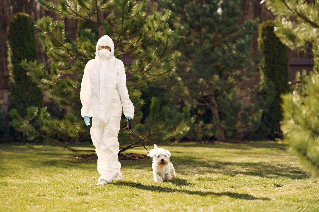 Каким образом собаки могут учуять, болен ли человек COVID-19?