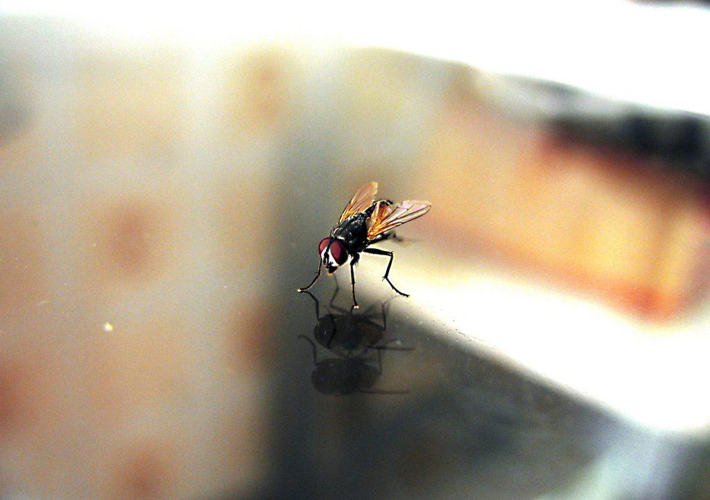 Как эффективно избавиться от мух в доме без помощи мухобойки