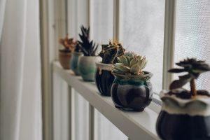 Как опознать и предотвратить солнечные ожоги у комнатных растений
