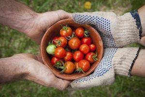 Как правильно хранить помидоры и почему в холодильнике они портятся