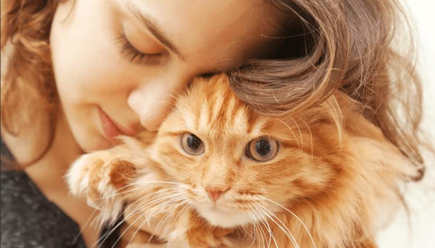 «Принцип кошечки» Софии Мачульской