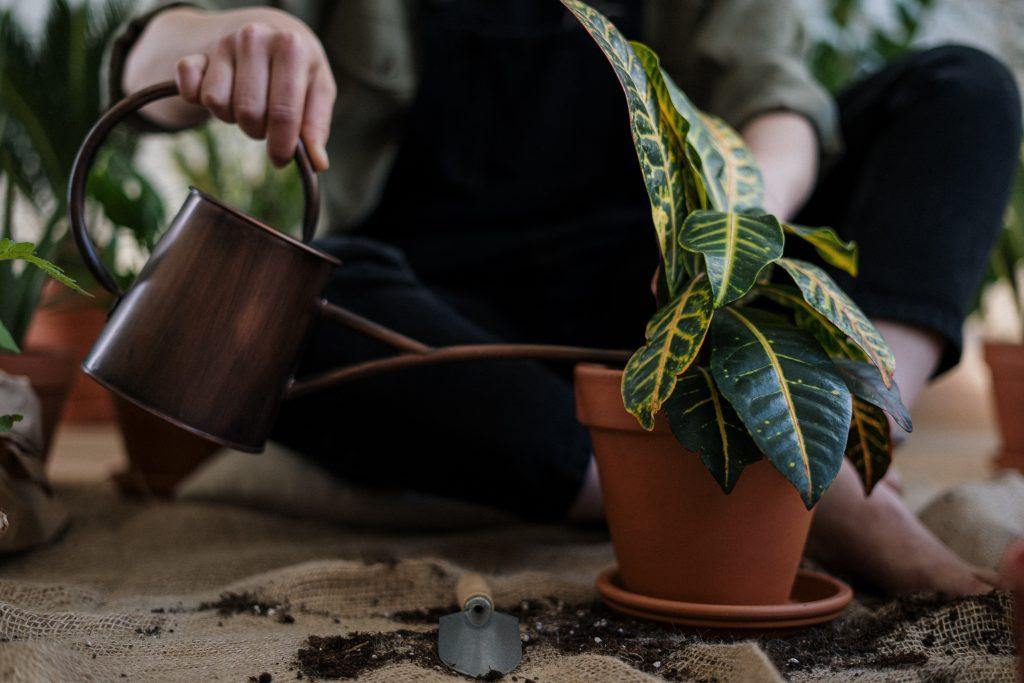Безобидная вещь, которая может убить все ваши растения на подоконнике или в саду