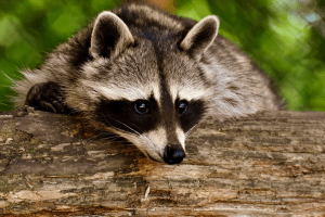Повышаем экологичность: L'Oréal больше не будут использовать шерсть животных
