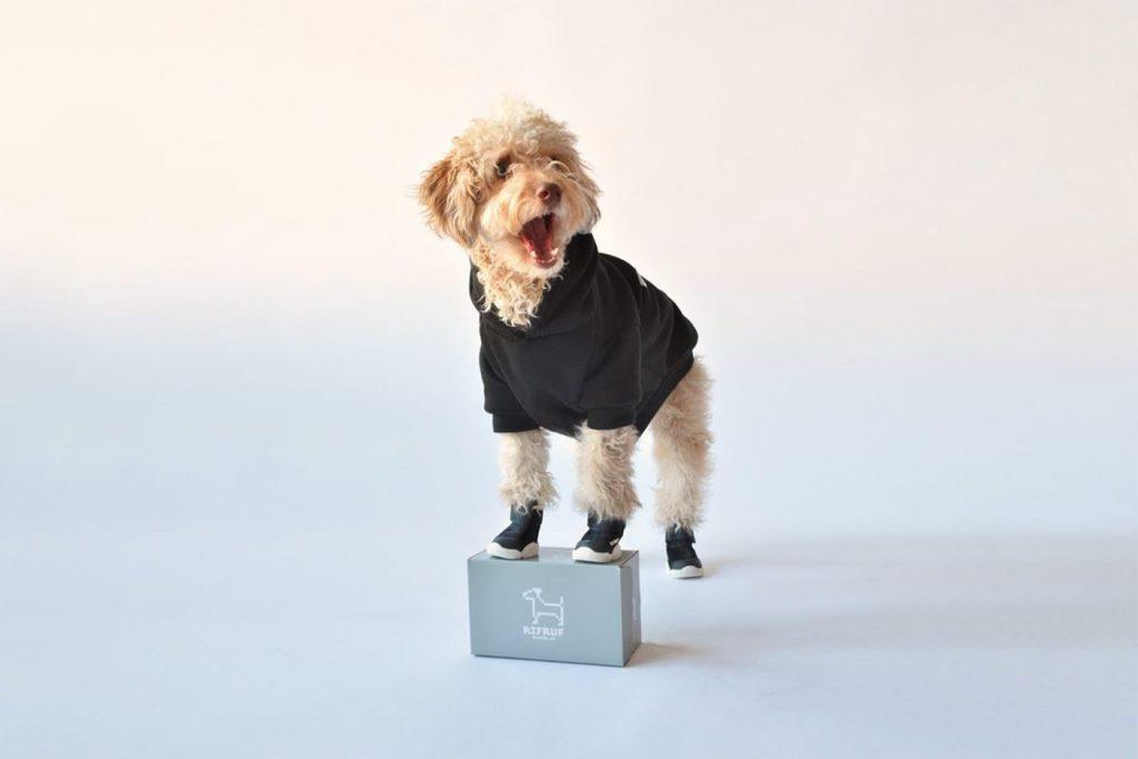 Все лучшее для ваших собак: RifRuf показали коллекцию обуви для животных