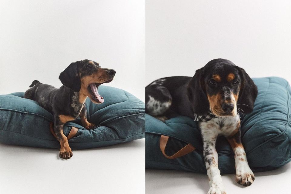 С любовью к животным: Zara выпустили коллекцию одежды для домашних питомцев