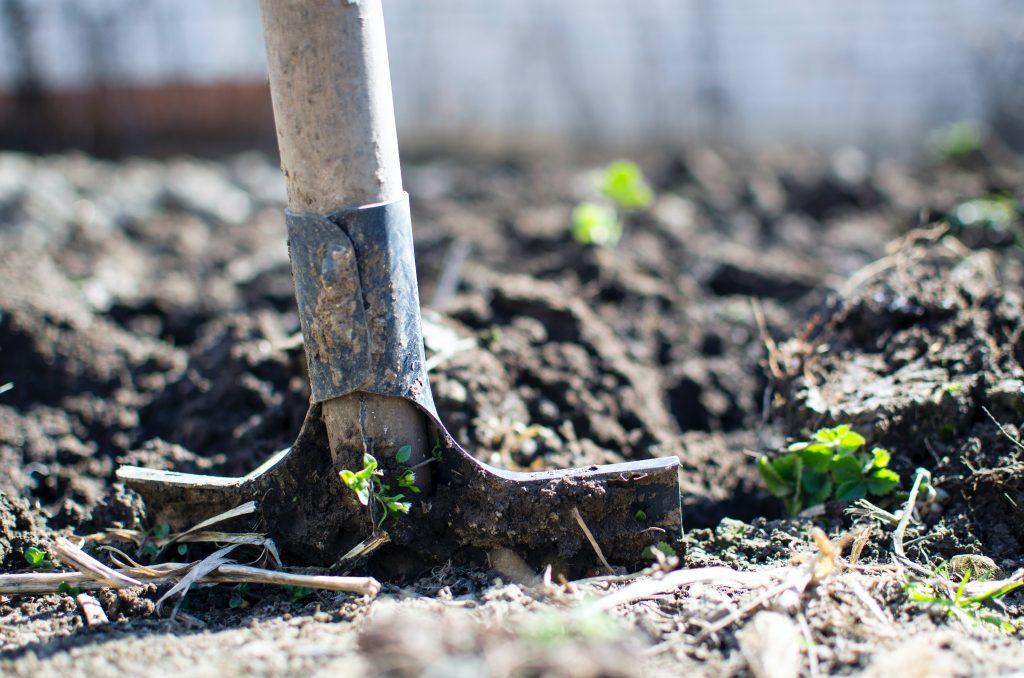 4 вещи, которые многие упускают из виду, когда сажают растения на участке