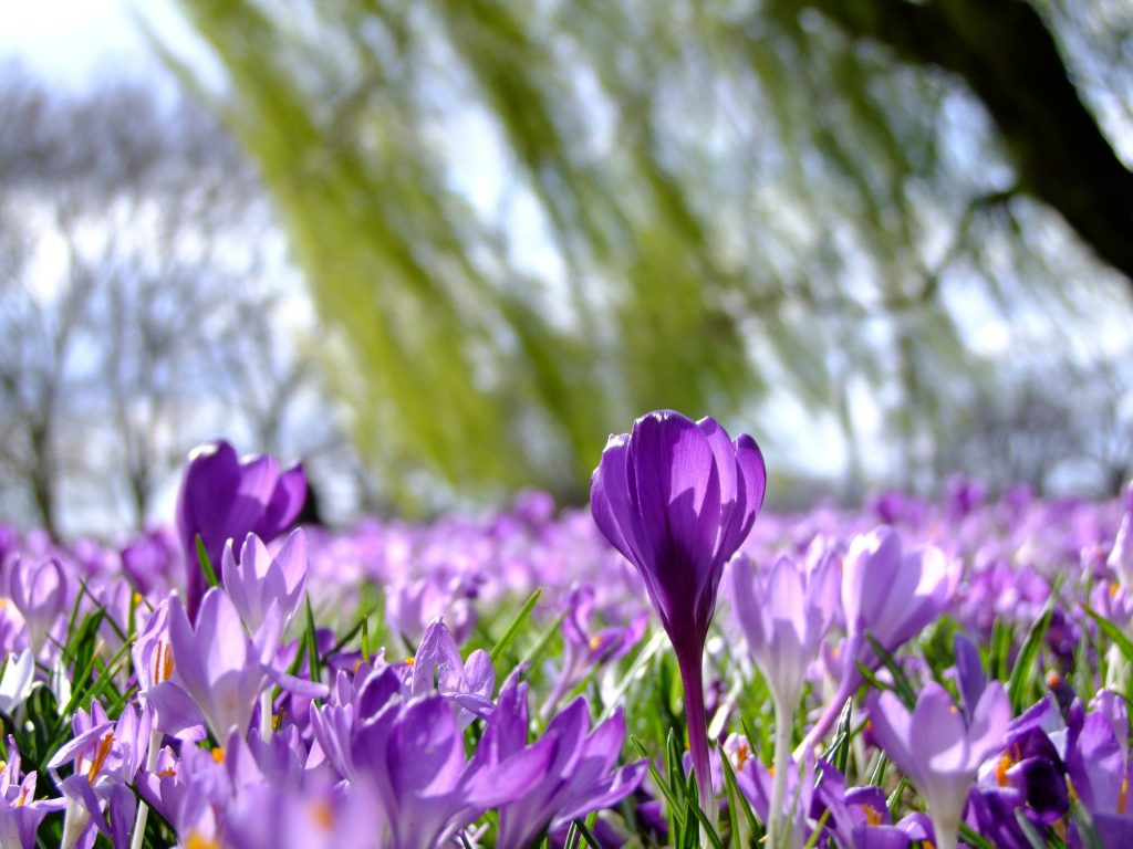 Куда поехать в марте 2021: уникальное цветущее место в Украине