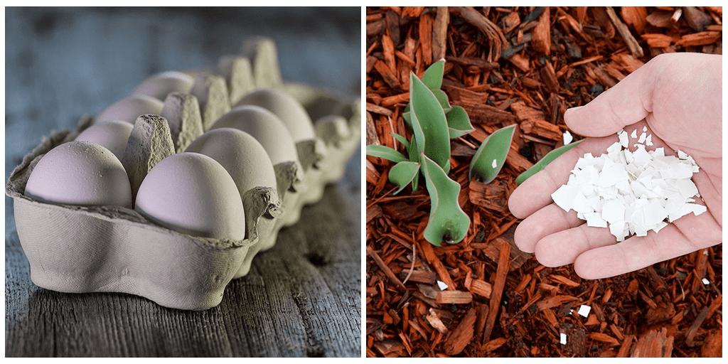 Почему ваш сад нуждается в яичной скорлупе: 3 совета на вес золота