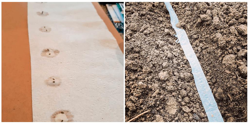 Что такое лента для семян и как её сделать для легкой весенней посадки