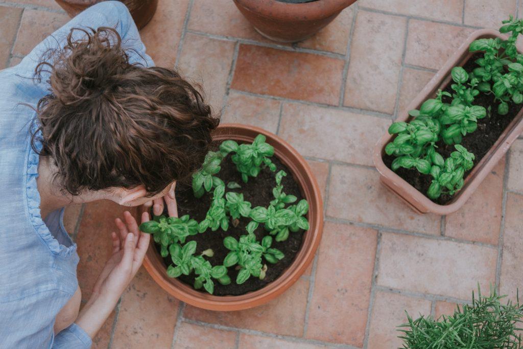 Какие сажать растения дома, чтобы отпугнуть насекомых и комаров