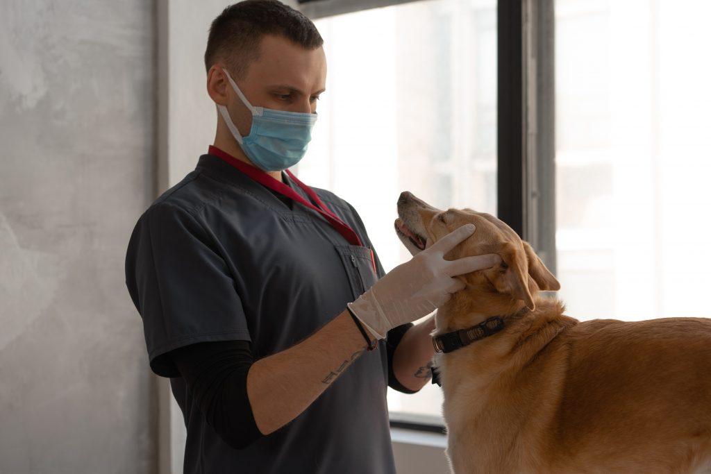 Единственный признак коронавируса у собак, который обнаружили недавно