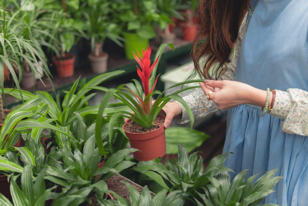 3 явных признака того, что ваше растение просит горшок побольше
