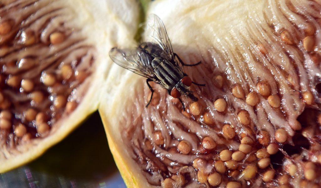 Безопасно ли есть пищу, на которую приземляется муха?