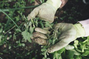 Как быстро избавиться от сорняков в саду: 4 натуральных средства