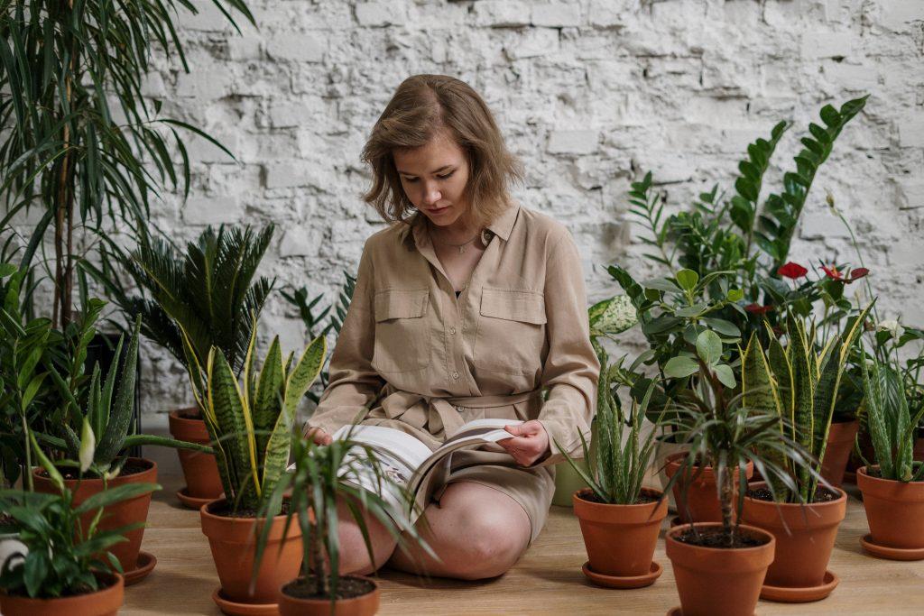 Лучшее растение, которое вы можете выращивать у себя дома