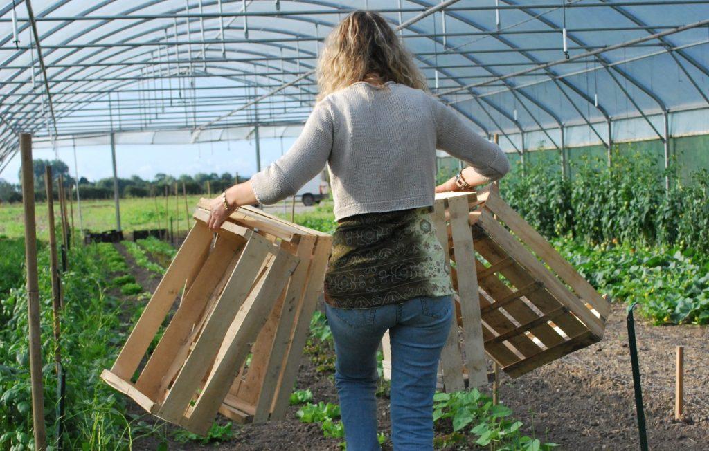 Распространённые погрешности в саду и огороде, которые пора исправить