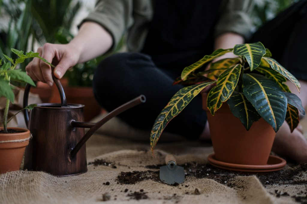 Что вы забываете сделать с растениями, из-за чего они не могут дышать