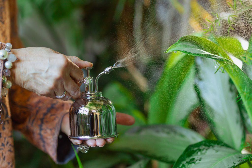 Элементарный совет, как обезопасить комнатные растения от вредителей
