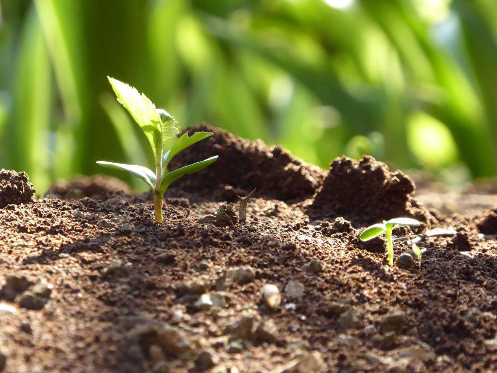Какую зелень можно (и даже нужно) посадить в огороде в июне