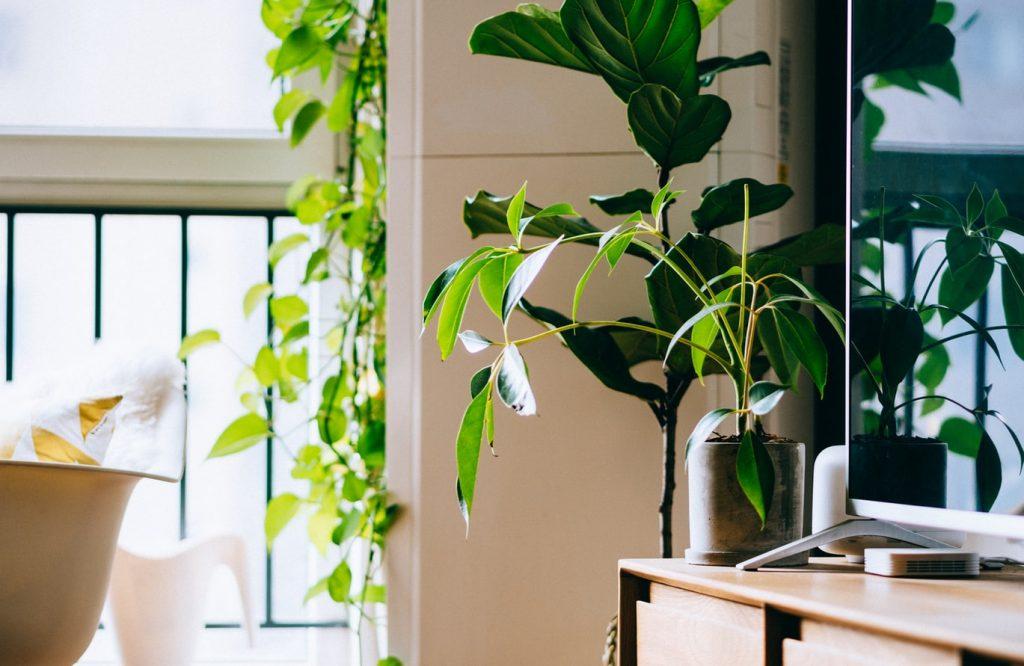 Удивительная вещь в доме, которая спасёт растения в аномальную жару