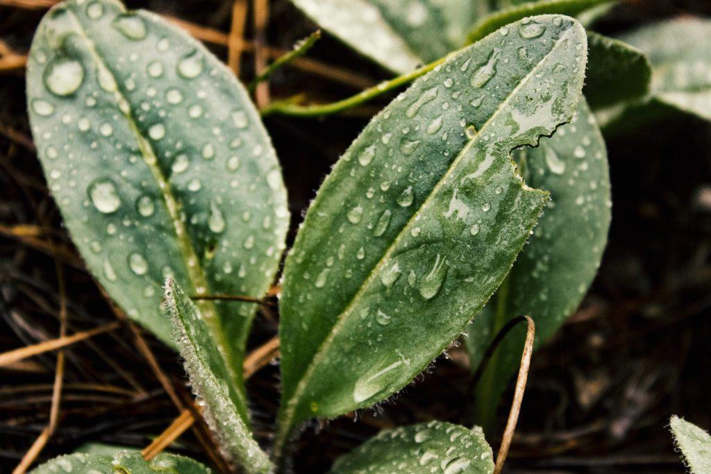 Как защитить растения в саду и огороде, когда часто идут дожди