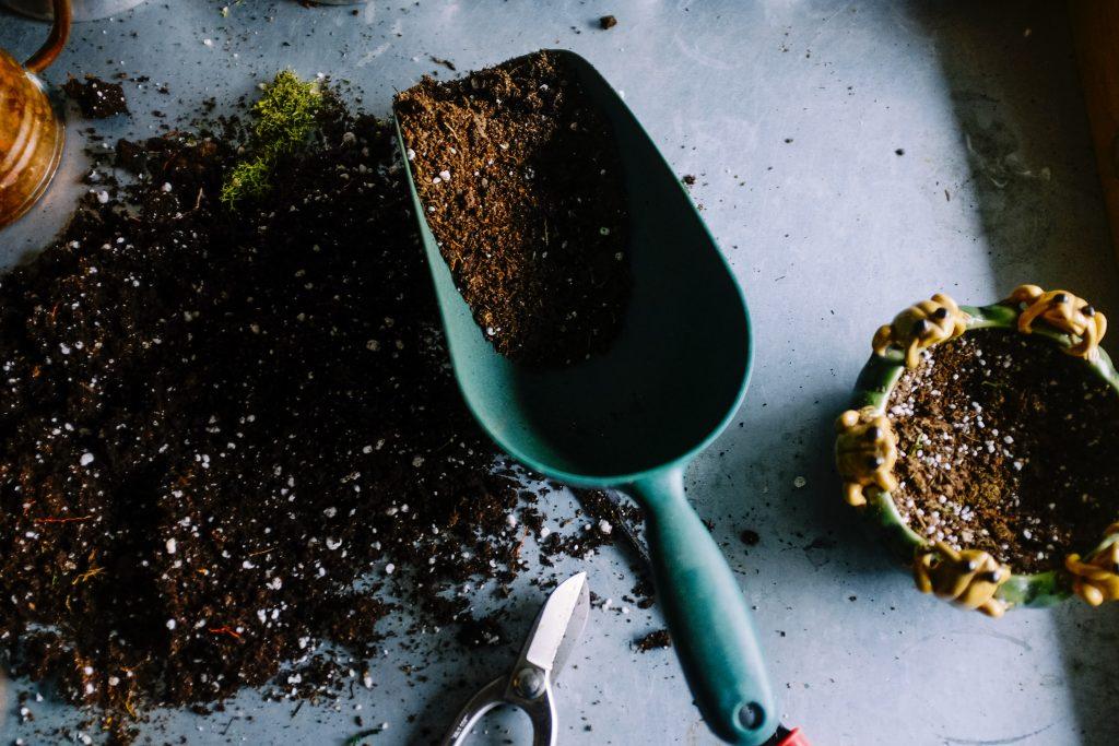 Когда полезно посыпать солью растения в саду и горшках: мнение эксперта
