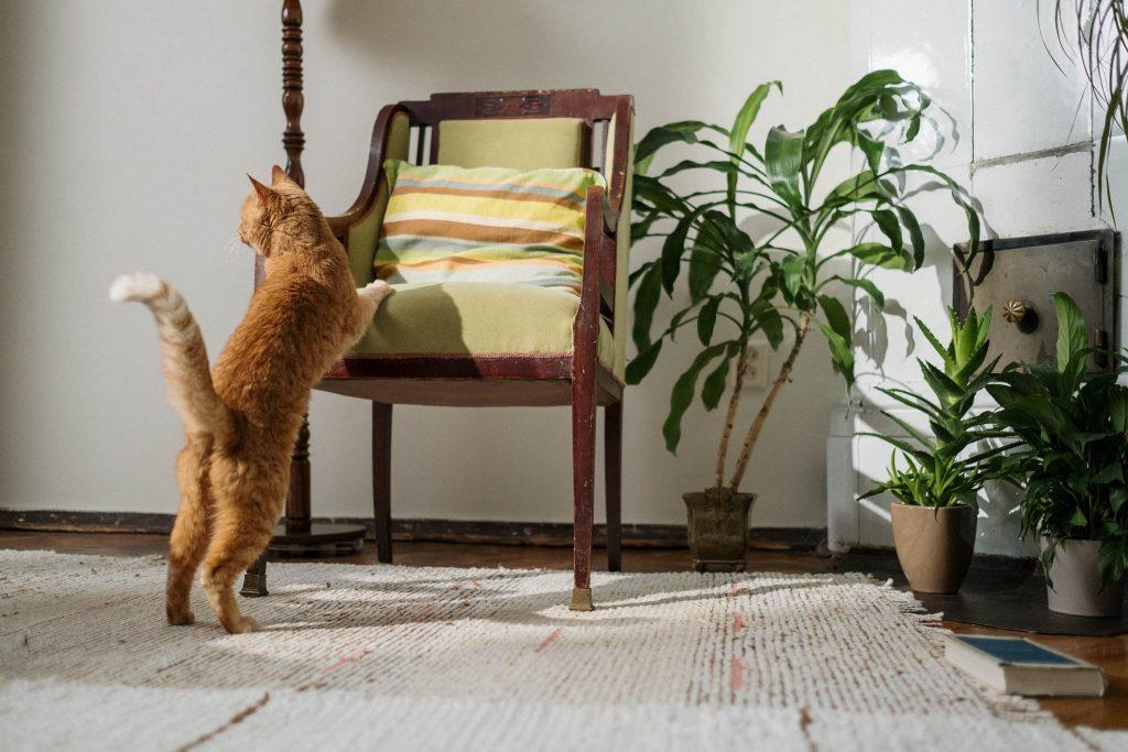 Неожиданные комнатные растения, которых не должно быть в доме, где есть питомцы