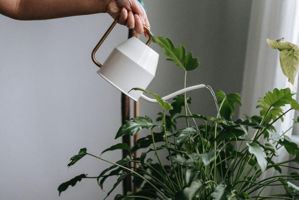 Секундный тест, который поможет определить, нужна ли растениям вода