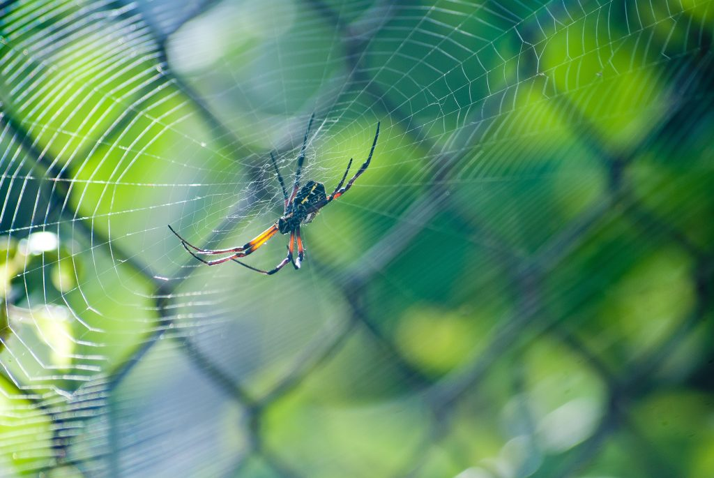 Одно растение, которое является виновником появления пауков в саду или доме