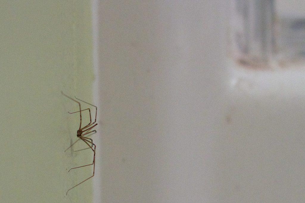 Вещь, которую нельзя оставлять в ванной, ведь она привлечёт пауков