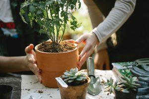 3 пищевых отхода, которые вы можете использовать как удобрение для растений