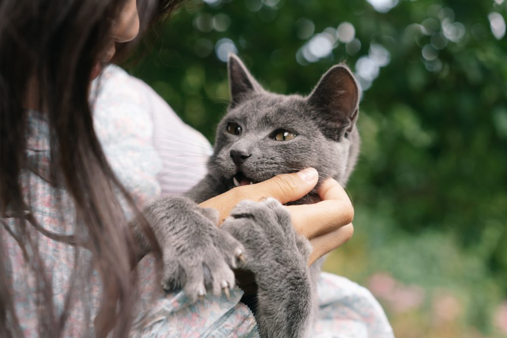 Первое, что вы должны сделать, если вас поцарапала кошка (чтобы не было инфекции)