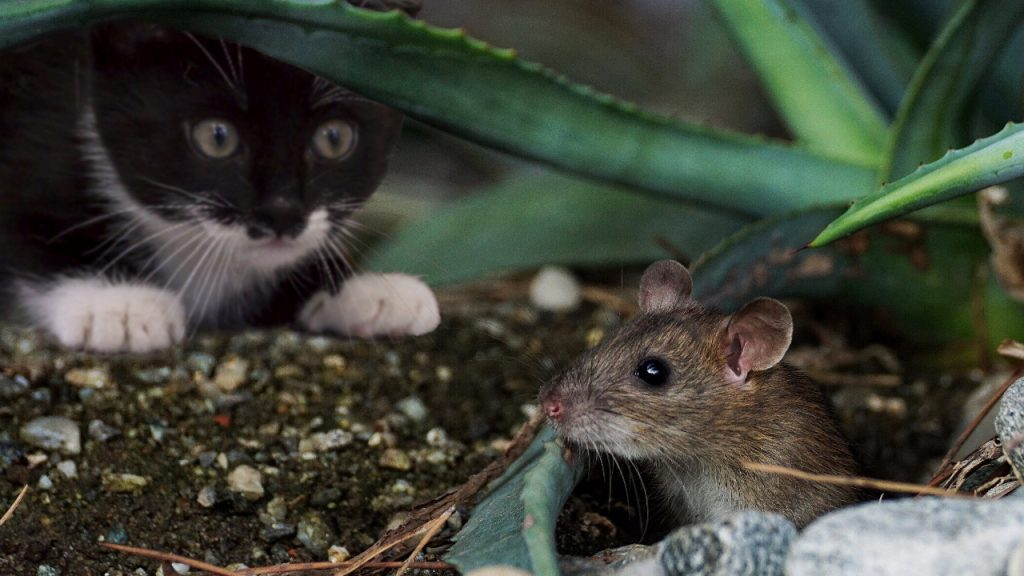 Один запах у вас дома, который говорит о том, что в нём завелись мыши